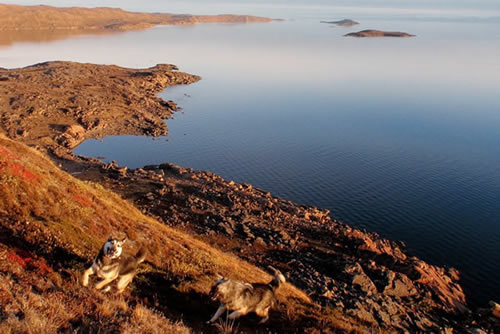 Grace and Nuka enjoy a romp at Iqaluit bay, September 20, 2010