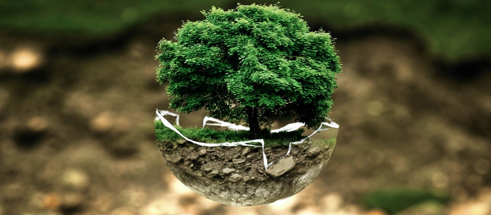 Banner image for Globalization and the Environment