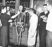 Biology students examine a teaching skeleton (1950's).