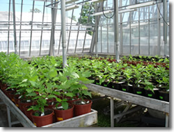 greenhouse_06