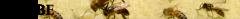 oCUBE_logo