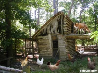 Fox-guarding-the-hen-house-512bf2d4bec97