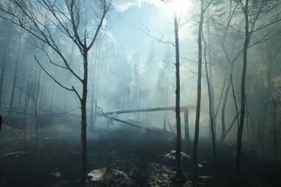 burning_woods