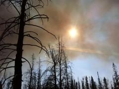 sun_thru_smoke