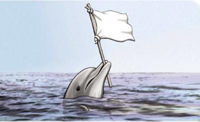 surrender_dolphin