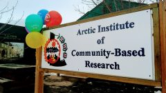 A picture of the Arctic Institute of Community-Based Research's sign, featuring their name, logo, and some 10th anniversary balloons.
