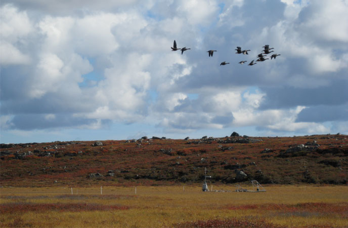 Professor Humphreys' Arctic research site (with birds overhead) in Northwest Territories, Canada. Photograph by Mike Treberg