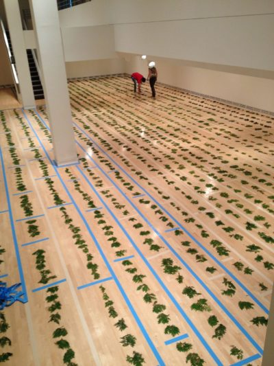 Cedar laid down on floor (Photo by Sandra Dyck). Boughs of fresh cedar were laid down on the floor of the gallery, prior to the taping down of the red fabric that demarcated the lodge.