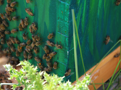 Photo for the news post: The Unexpected Benefits of Beekeeping