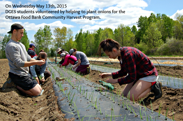 photo of students planting onions for food bank