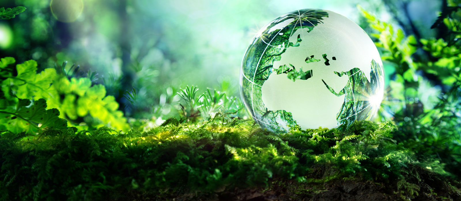 Banner image for Environmental Studies