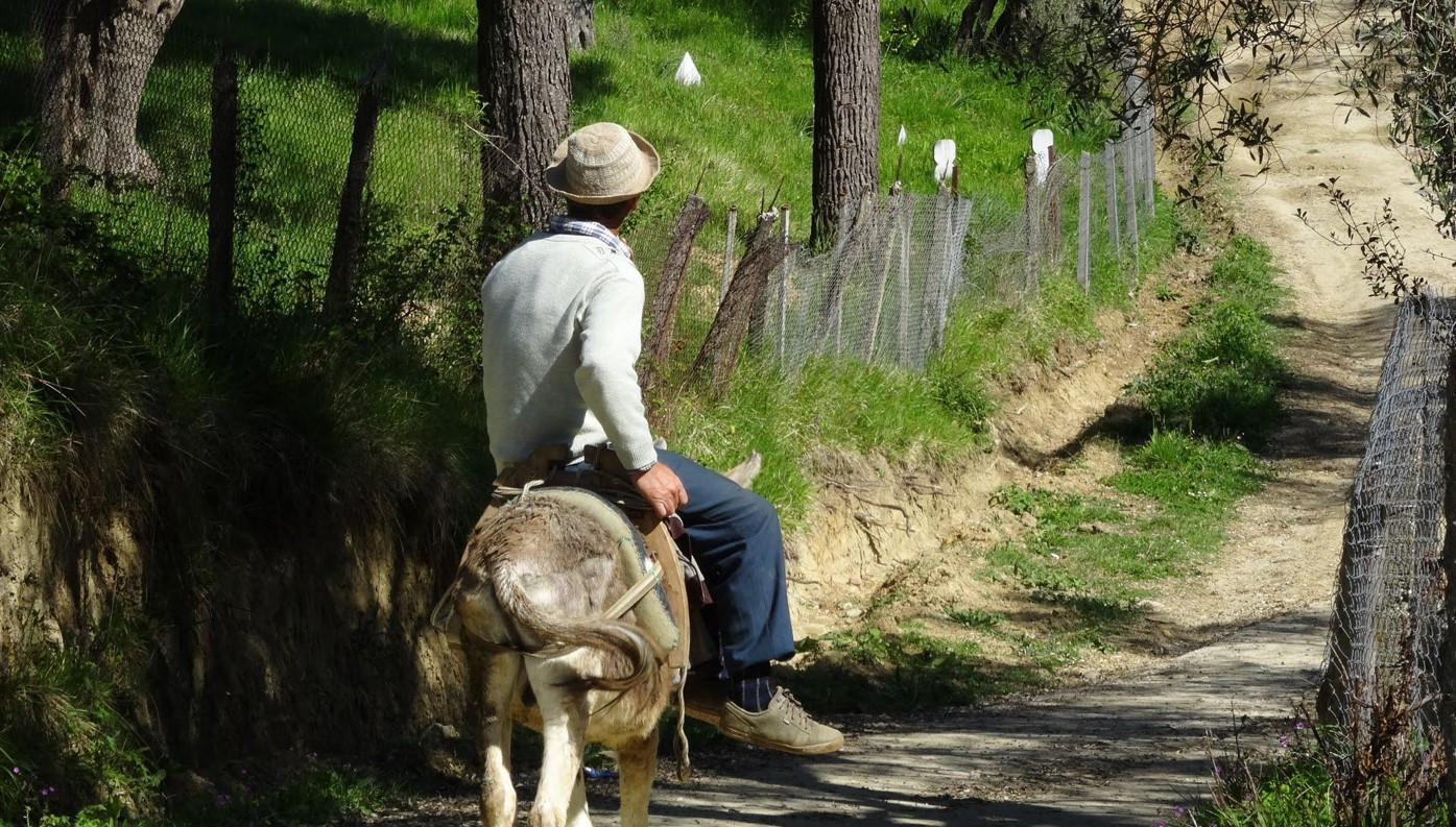 an Albanian and his donkey on the Roman road (this photo and all that follow are by Walter)