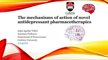 Thumbnail for: The Mechanisms of Action of Novel Antidepressant Pharmacotherapies with Dr. Argel Aguilar-Valles