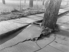 tree and cracked pavement