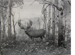 Mule Deer_1930_DenverMuseum copy