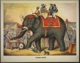 elephant-03750u