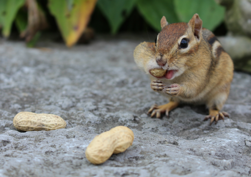 "Katie Hartai - ""What Peanut?"""
