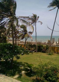 Garden at the French Embassy in Pondicherry