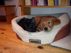 Emma and Smokey - Sept 10-2012