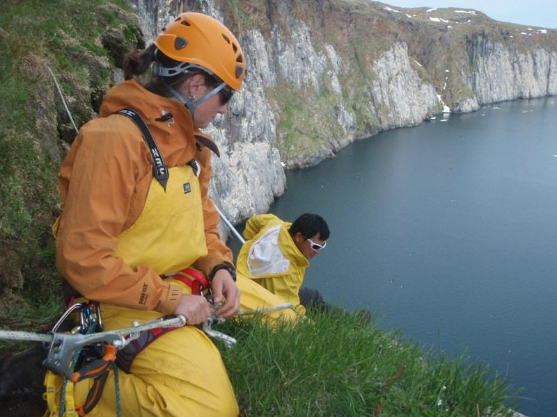 Christie Macdonald and Kerry Woo trap cliff nesting seabirds at Digges Island, Nunavik (J. Werner)