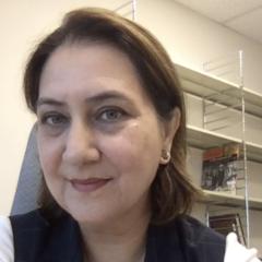 Shazia Sadaf