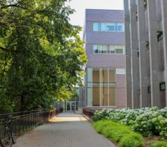 Pathway lined with trees and plants leading to a building.
