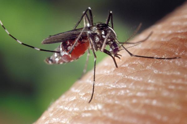 Read more: Rainford, Greenberg publish on Zika virus risk