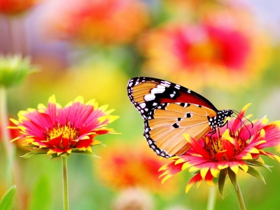 Photo for the news post: Weekly Sustainability Tip – How to Create a Pollinator-Friendly Garden
