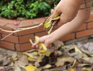 Two hands putting leaves in a pile on the ground